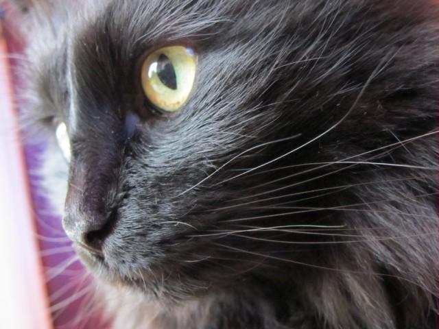 Raven-closeup.jpg