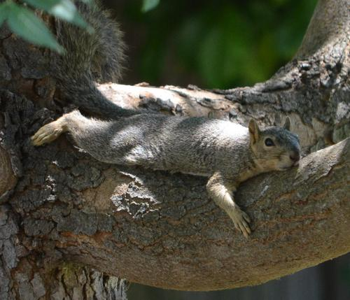 tree-squirrel2.jpg
