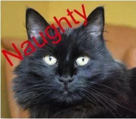 Naughty1.JPG