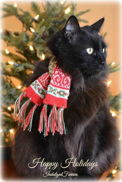 Raven-Christmas-2015-frosty2.jpg