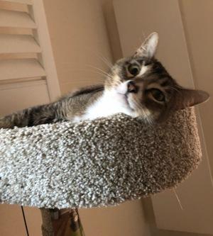 kitty on perch