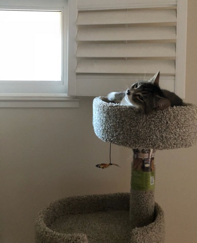 kitty on perch