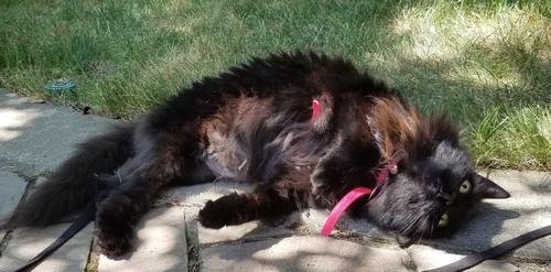 Raven lounging outside