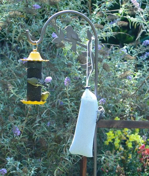 Finches at bird feeder
