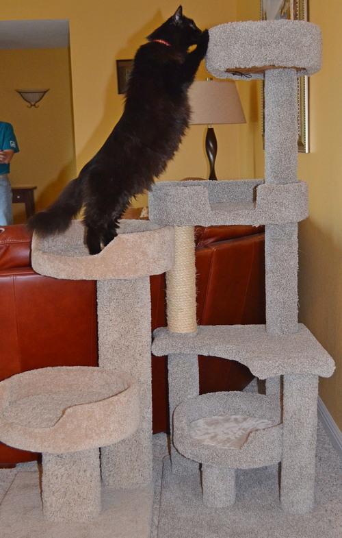Raven's new tall perch
