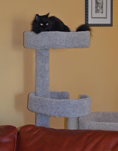 Raven's new perch 2