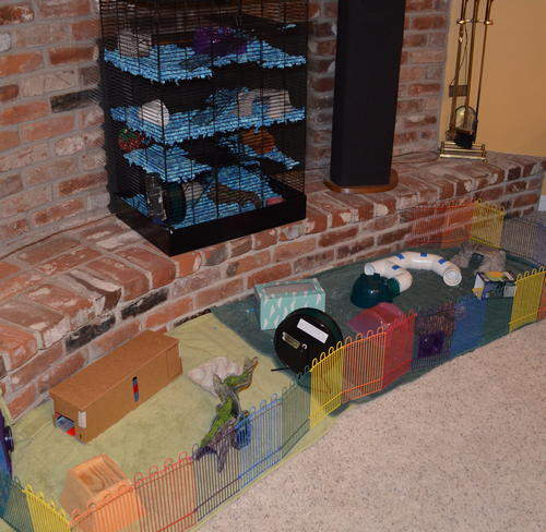 Cloud Hamster cage and playland