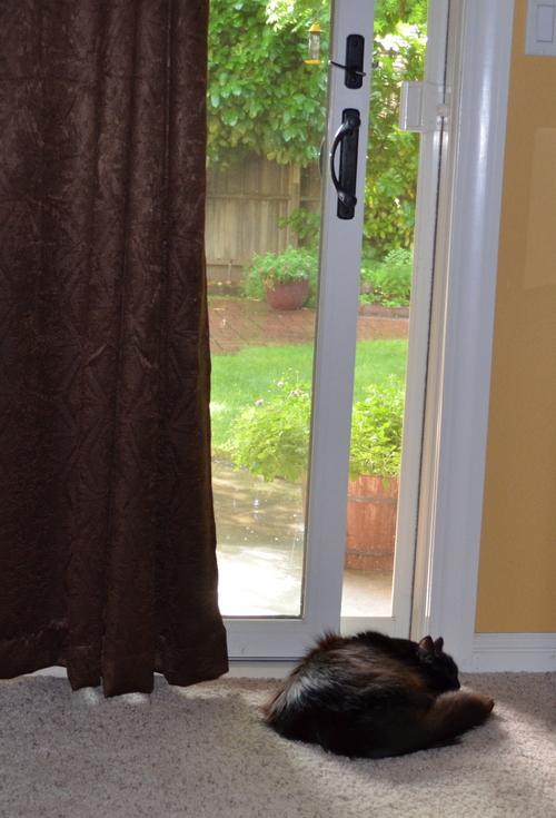 Raven by the open window
