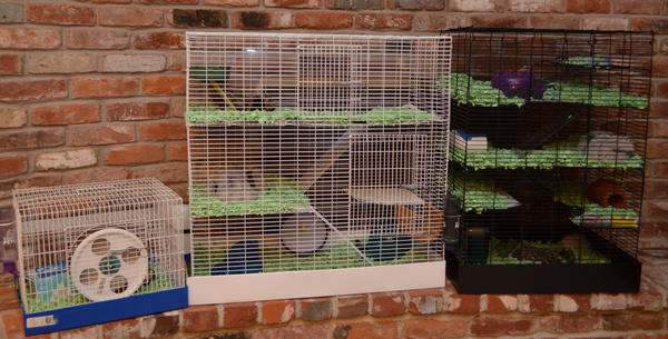 Three hamster cages