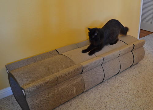 Raven scratching on cat-face scratcher tunnel