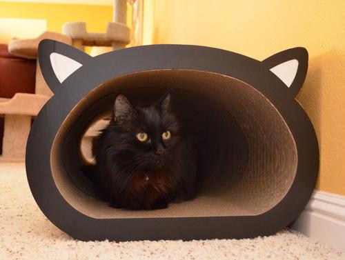 Raven in cat-face scratcher tunnel