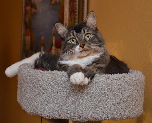 Kitten Tilly resting in her perch