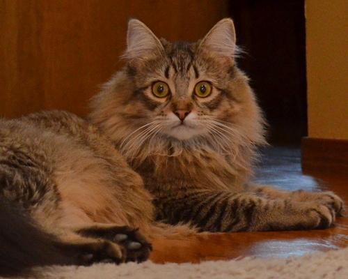 Kitten Wolfie looking alert