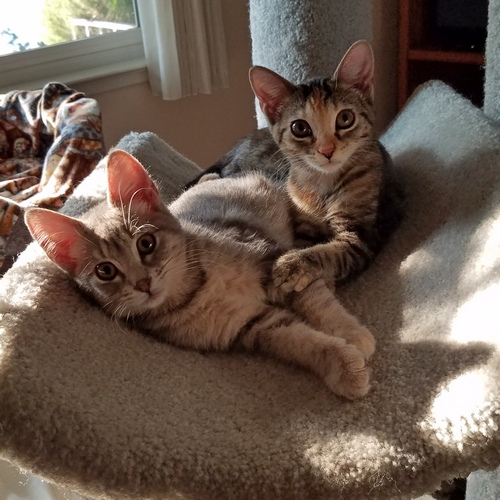 Kittens Pearl and Molly cuddling in a perch.